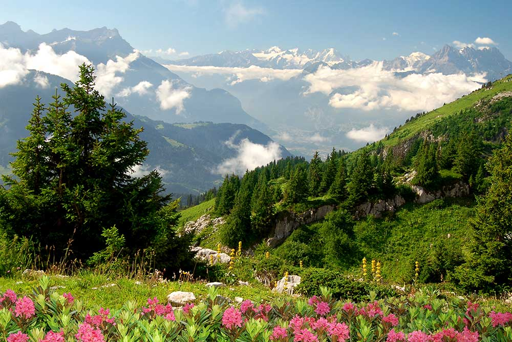 Fans of the prestigious resort of Courchevel 1850 in the